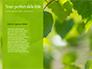 Green Tree Leaves in Sunlight Presentation slide 9