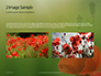 Amazing Red Poppy Presentation slide 11