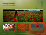 Amazing Red Poppy Presentation slide 13