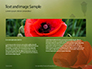 Amazing Red Poppy Presentation slide 14