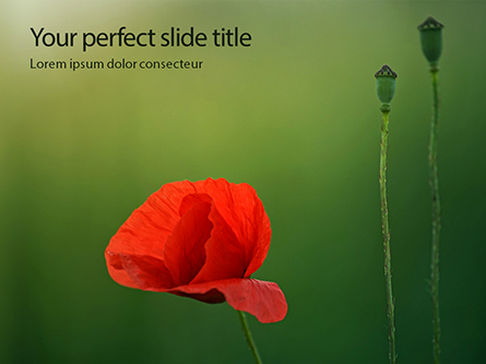Amazing Red Poppy Presentation Presentation Template, Master Slide