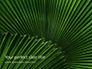 Leaves of the Fan Palm Presentation slide 1