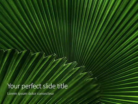Leaves of the Fan Palm Presentation Presentation Template, Master Slide