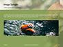 Red Panda Climbing on Tree Presentation slide 10
