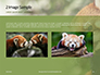 Red Panda Climbing on Tree Presentation slide 11