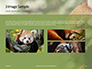 Red Panda Climbing on Tree Presentation slide 12