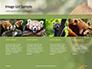 Red Panda Climbing on Tree Presentation slide 16