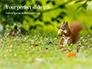 A Squirrel Gnaws a Nut Presentation slide 1
