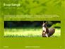 A Squirrel Gnaws a Nut Presentation slide 10