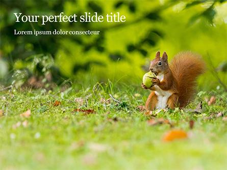 A Squirrel Gnaws a Nut Presentation Presentation Template, Master Slide