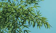 Bamboo Leaves on Blue Background Presentation Presentation Template