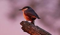 A Black Bird Perching on Tree Branch Presentation Presentation Template