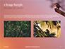 A Black Bird Perching on Tree Branch Presentation slide 11