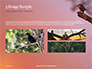 A Black Bird Perching on Tree Branch Presentation slide 12