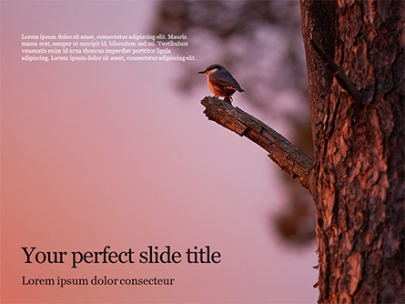 A Black Bird Perching on Tree Branch Presentation Presentation Template, Master Slide