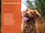 Cute Puppy Portrait on Orange Background Presentation slide 9