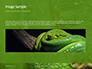 Emerald Python Coiled on Tree Presentation slide 10