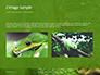 Emerald Python Coiled on Tree Presentation slide 11