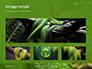 Emerald Python Coiled on Tree Presentation slide 13