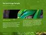 Emerald Python Coiled on Tree Presentation slide 14