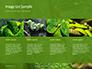 Emerald Python Coiled on Tree Presentation slide 16