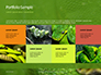 Emerald Python Coiled on Tree Presentation slide 17