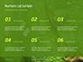 Emerald Python Coiled on Tree Presentation slide 8
