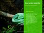 Emerald Python Coiled on Tree Presentation slide 9