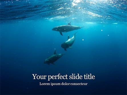 A Group of Dolphins Under Water Presentation Presentation Template, Master Slide