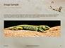 Lizard on the Sand Presentation slide 10
