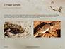 Lizard on the Sand Presentation slide 11
