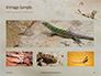 Lizard on the Sand Presentation slide 13