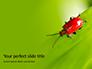 Lily Beetle Sitting on a Green Leaf Presentation slide 1
