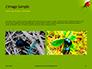 Lily Beetle Sitting on a Green Leaf Presentation slide 11