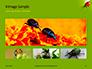 Lily Beetle Sitting on a Green Leaf Presentation slide 13