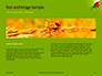 Lily Beetle Sitting on a Green Leaf Presentation slide 14