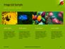 Lily Beetle Sitting on a Green Leaf Presentation slide 16