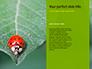 Lily Beetle Sitting on a Green Leaf Presentation slide 9
