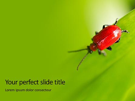 Lily Beetle Sitting on a Green Leaf Presentation Presentation Template, Master Slide