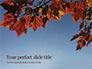 Maple Tree Branch in Autumn against Blue Sky Presentation slide 1
