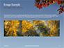 Maple Tree Branch in Autumn against Blue Sky Presentation slide 10