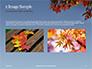 Maple Tree Branch in Autumn against Blue Sky Presentation slide 11