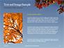 Maple Tree Branch in Autumn against Blue Sky Presentation slide 15
