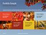 Maple Tree Branch in Autumn against Blue Sky Presentation slide 17