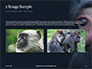 Two Gray Primates Presentation slide 11