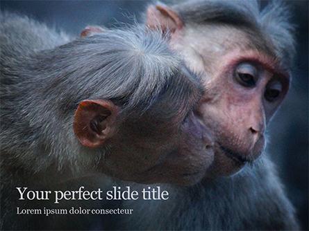 Two Gray Primates Presentation Presentation Template, Master Slide