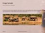 African Elephants Presentation slide 10
