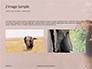 African Elephants Presentation slide 11
