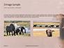 African Elephants Presentation slide 12