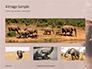 African Elephants Presentation slide 13